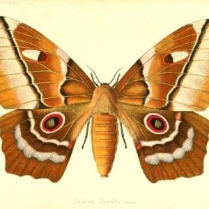 Biodiversity Illustrations